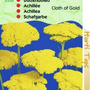 achillea-filipendula-cloth-of-gold_2029_1.jpg