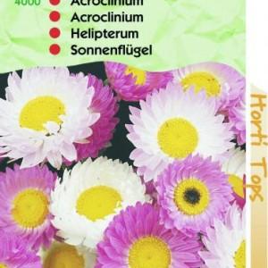 acroclineum-roseum-zomerstrobloem_1790_1.jpg