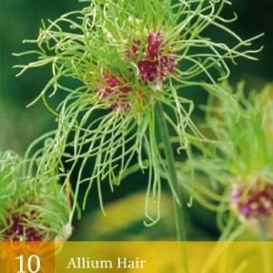 allium-hair_450_1.jpg