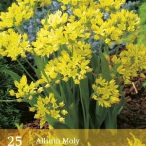 allium-moly_2490_1.jpg