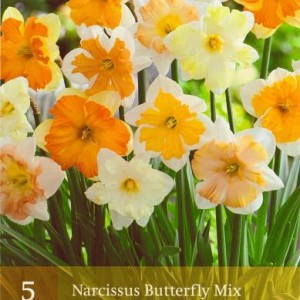 narcis-butterfly-mix_2264_1.jpg
