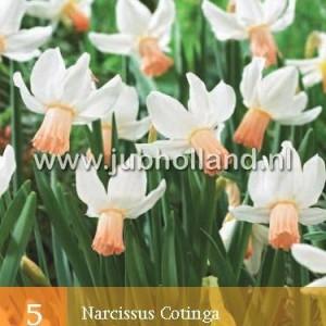 narcis-cotinga_2785_1.jpg