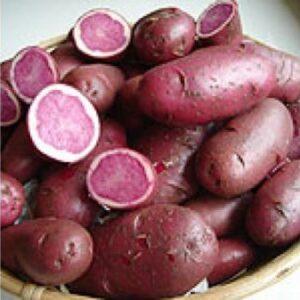 pootaardappelen-highland-burgundy-red-per-kg_2682_1.jpg