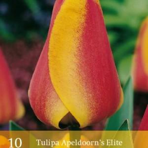 tulp-apeldoorns-elite_2240_1.jpg