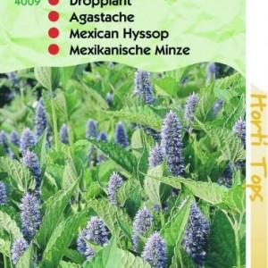 agastache-mexicanum-dropplant_1792_1.jpg