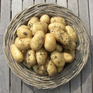 belle-de-fontenay-pootaardappelen-1-kg_2678_1.jpg