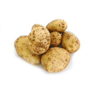 bintje pootaardappelen