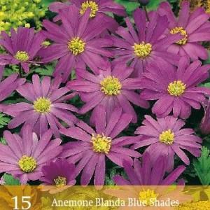 blanda-blue-shades_459_1.jpg