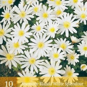 blanda-white-splendour_461_1.jpg