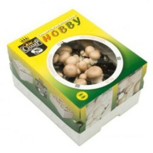 champignon-kweekset-wit_1294_1.jpg