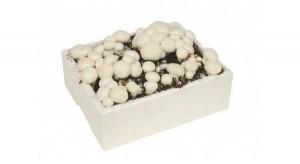 champignon-kweekset-wit_1294_2.jpg