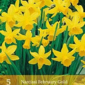 february-gold_424_1.jpg