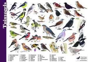 kleine tuinvogels