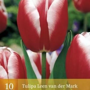 leen-van-der-mark_336_1.jpg