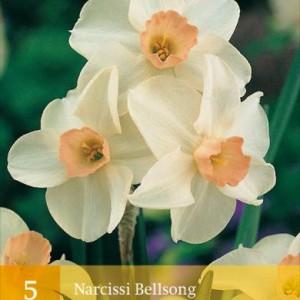 narcis-bell-song_2470_1.jpg