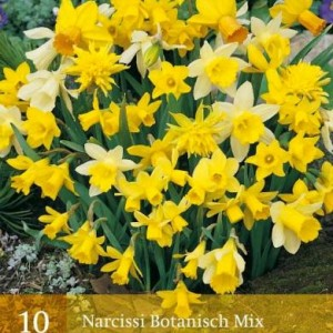 narcis-botanisch-mix_2487_1.jpg