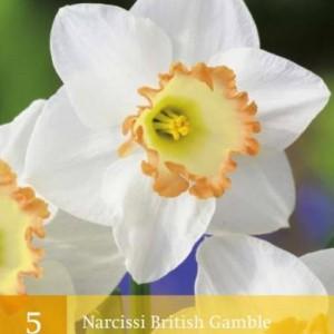 narcis-british-gamble_2472_1.jpg