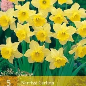 narcis-carlton_2257_1.jpg