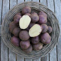 pootaardappelen-koopmans-blauwe_2680_1.jpg
