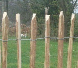 schapenhek 1
