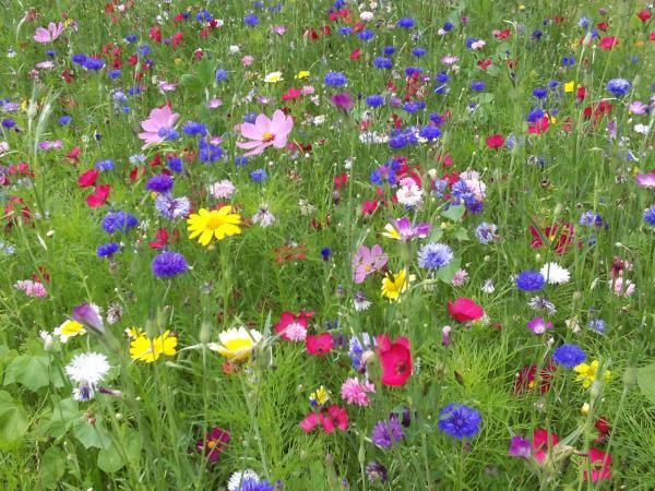 wilde bloemen zaden mengsel van wilde bloemen zaaien